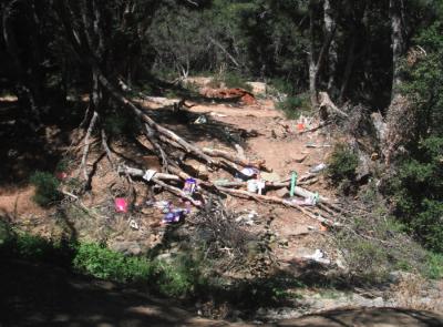 Cherry Creek Fallen Trees