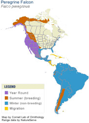Peregrine falcon range map.
