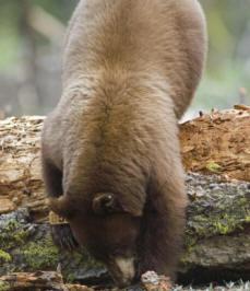 bears 005