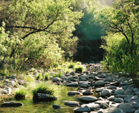 Manzana Creek; image courtesy PAAT