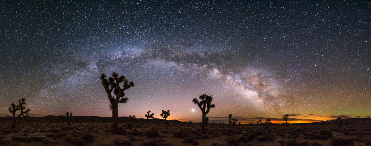 Joshua Trees and the Milky Way, Death Valley National Park